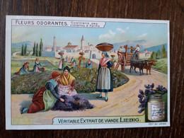 L32/379 Chromo LIEBIG - Fleurs Odorantes . Cueillette Des Violettes à Parme - Liebig