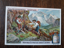 L32/381 Chromo LIEBIG - Fleurs Odorantes . Cueillette Des Oeillets Alpins - Liebig