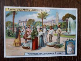 L32/383 Chromo LIEBIG - Fleurs Odorantes . Indiens Vendant Des Tubereuses à Mexico - Liebig