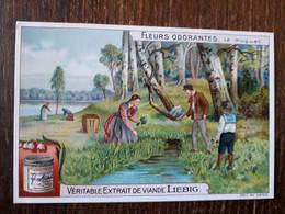 L32/384 Chromo LIEBIG - Fleurs Odorantes . Le Muguet - Liebig