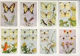Fort - Vlinders, Papillons, Butterflies - 109 - 116 - Non Classés