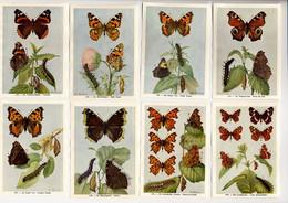 Fort - Vlinders, Papillons, Butterflies - 133 - 140 - Non Classés
