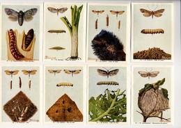 Fort - Motten - Papillons Nocturnes - Moths - 36 - 43 - Non Classés