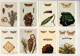 Fort - Motten - Papillons Nocturnes - Moths - 52 - 59 - Non Classés
