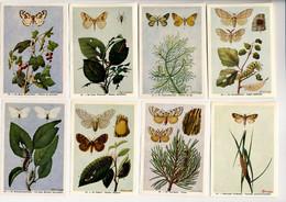 Fort - Motten - Papillons Nocturnes - Moths - 60 - 67 - Non Classés