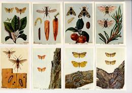 Fort - Motten - Papillons Nocturnes - Moths - 68 - 75 - Non Classés