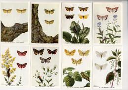Fort - Motten - Papillons Nocturnes - Moths - 76 - 83 - Non Classés