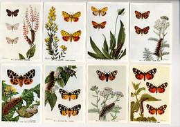 Fort - Motten - Papillons Nocturnes - Moths - 84 - 91 - Non Classés