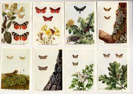 Fort - Motten - Papillons Nocturnes - Moths - 92 - 99 - Non Classés