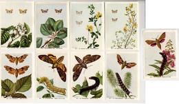 Fort - Motten - Papillons Nocturnes - Moths - 100 - 108 - Non Classés