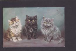 Cat Card -   Three Fluffy Kittens. - Chats