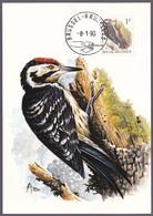 Cartes Maximum  - André BUZIN - Oiseaux : Pic Epeichette / Klein Bonte Specht - Timbre N° 2349  (COB) - 1985-.. Pájaros (Buzin)