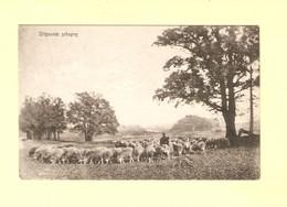 Elspeet Herder Met Schaapskudde 1909 RY46902 - Other