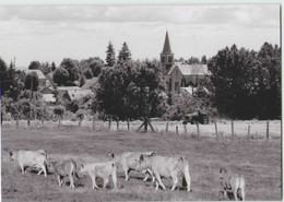 CPM 12 CONDOM D'AUBRAC ... Vue Générale (Livenais) Vaches - Andere Gemeenten