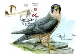 A.BUZIN    FAUCON PELERIN - 1985-.. Pájaros (Buzin)
