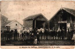 Belgique - BRF - Scherpenheuvel - Schuyten - Van Bellingen - Bij De Statie - Poneys Russes à Vendre - Scherpenheuvel-Zichem