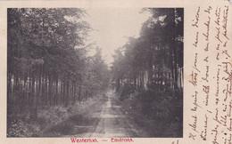 WESTERLO / OMGEVING / BOSDREEF 1903 - Westerlo