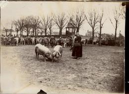 44 - BLAIN - Photo Originale - Marché Aux Cochons - Places