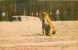 94* VINCENNES Zoo – Lion         RL10.1050 - Vincennes