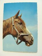 Chevaux   CAVALLO CHEVAL  NON  VIAGGIATA COME DA FOTO - Horses