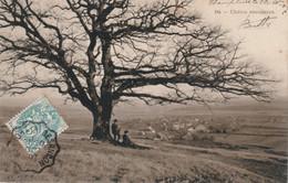 CHAMPLIVE (Doubs) - Le Chêne Séculaire. Edition Teulet Simili-Charbon, N° 94. Circulée En 1907. Bon état. - Other Municipalities
