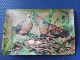Old NORTH KOREA  Postcard -  Eastern Turtle-dove Bird  - STEREO 3D PC - - Rare!!! - Korea, North