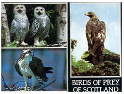 (KK 3) Birds Of Scotland (posted To Philippines From Hong Kong - 1989) - Birds