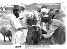 Photo UNHCR /  H. Gloaguen 1984 Pakistan Réfugiés Afghans Barakai Soins Vétérinaires - Ohne Zuordnung