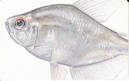 TARJETA DE VENEZUELA DE UN PEZ  (FISH-PEZ-POISSON) - Pesci