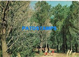 154554 ARGENTINA MIRAMAR EL VIVERO TREE NURSERY BREAK ONLY FOR CUSTOMERS POSTAL POSTCARD - Argentina