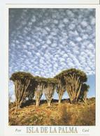 Postal 046801 : Isla De La Palma - Garafia. Dragos En Las Tricias - Non Classificati