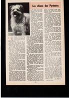 CHIEN - Article - Coupure De Presse - 1966 - Les Chiens Des Pyrénées - Publicidad