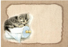 Chat - Cat - Katze- Poes Op Wc Rol - Chats