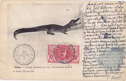23082# HAUT SENEGAL ET NIGER FAIDHERBE CARTE POSTALE JEUNE CAÏMAN Obl TOMBOUCTOU 1910 - Lettres & Documents