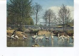 CPSM GF - Saint Cesaire Jardin Des Animaux, Flamants Roses, Grues Cendrées- Carte En Mauvais Etat Avec Des Plis - - Autres Communes