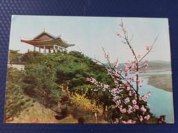 KOREA NORTH 1950s  Postcard - Pyongyang  - Mangebon Park - Korea, North