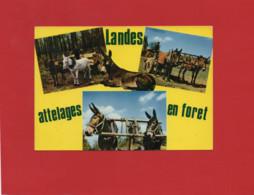 40-----LANDES --attelages En Forêt--attelages De Mules--( Peu Courante )--voir 2 Scans - Unclassified