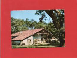 40-----LES LANDES DE GASCOGNE---jolie Ferme Landaise--voir 2 Scans - Unclassified