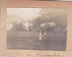 Photographies WW1 Vosges Saint Dié Robache Vue Générale Cavalier Vache    Réf 2975 - Guerra, Militari