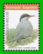 BUZIN - 4306** Sterne Arctique / Noordse Stern - 1985-.. Pájaros (Buzin)