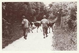 CARTE POSTALE 10CM/15CM PHOTO ROGER VIOLLET NORMANDIE JUIN 1944 DEBARQUEMENT AMERICAINS DANS LA CAMPAGNE NORMANDE - Oorlog 1939-45