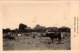 GUINÉ  PORTUGUESA - Un Troupeau De Vaches - Guinea-Bissau