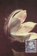 Carte Maximum - Heleborus Coni - Unclassified