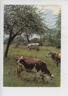 Vache Normande : La Normandie Pittoresque, Au Printemps Dans La Prairie (vaches) Cp N°401 Le Goubey) - Vaches