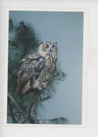 Hibou Grand-Duc, Fonds D'intrvention Pour Les Rapaces Saint Cloud - Philippe Garguil Photographe - Birds