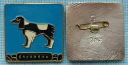 USSR / Badge / Soviet Union / RUSSIA Fauna. Dog. Spaniel. - Animales