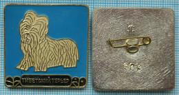 USSR / Badge / Soviet Union / RUSSIA Fauna. Dog. Tibetan Terrier. - Animales