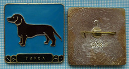 USSR / Badge / Soviet Union / RUSSIA Fauna. Dog. Dachshund. German Badger-dog . - Animales