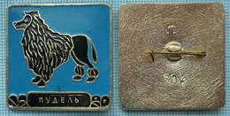 USSR / Badge / Soviet Union / RUSSIA Fauna. Dog. Poodle . - Animales