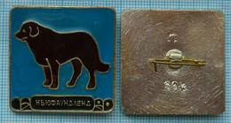 USSR / Badge / Soviet Union / RUSSIA Fauna. Dog. Newfoundland . - Animales